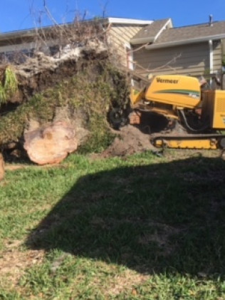 2 men removing a stump in Sarasota, FL