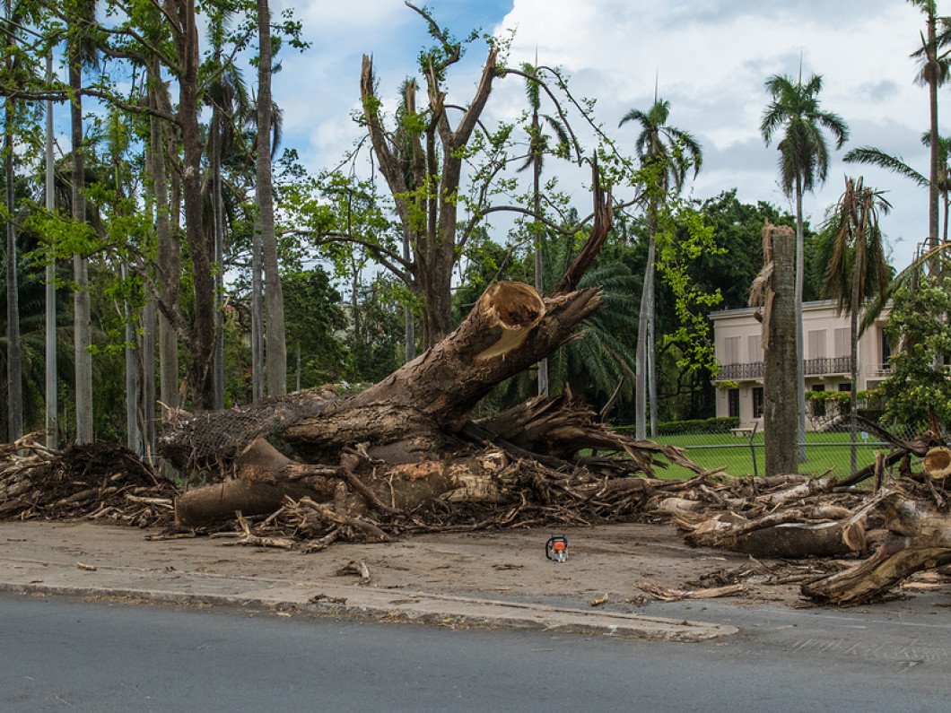 Rely on Our Tree Experts this Hurricane Season